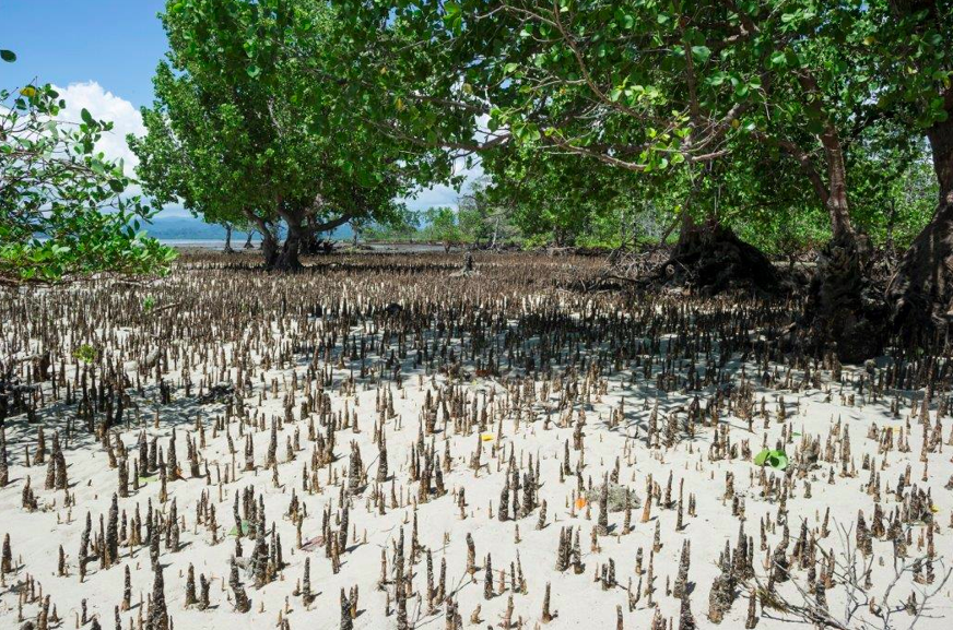 OMEGA lance « Time for the Planet » en Indonésie